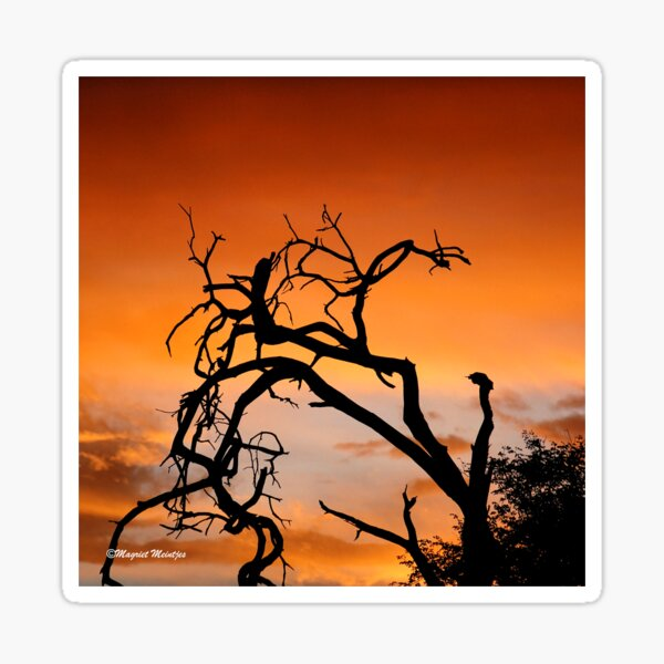 THE LONELY TREE AT GOLDEN HOUR Sticker