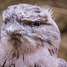 Tawny Frogmouth by inthewild