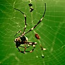 In the Spiders Web. by Katt25