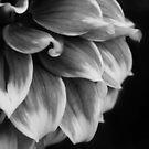 Simple Petals by Igor Mazulev