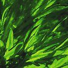 Overgreen I by Igor Mazulev