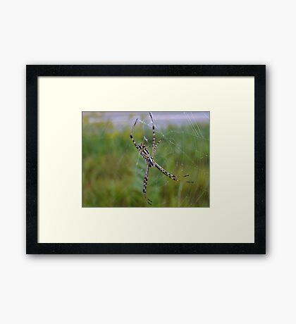 Hanging Beauty. Framed Print