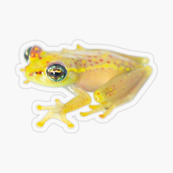 Boophis bottae Transparent Sticker