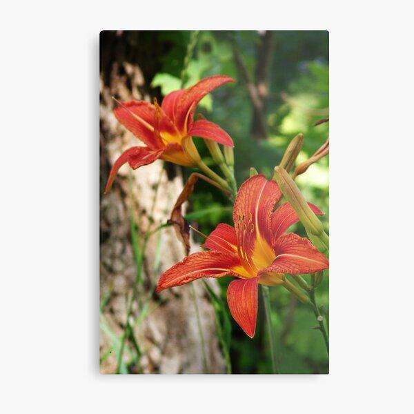 Orange Lilies In Bush Metal Print