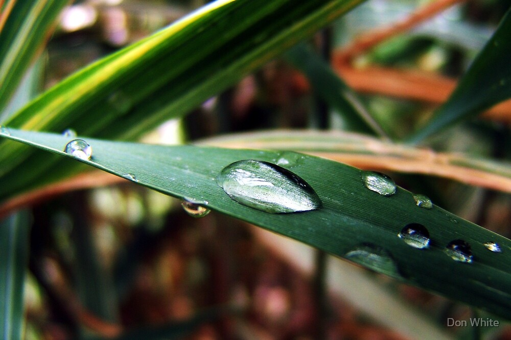 Water Droplets On A Blade Of Grass by Don White