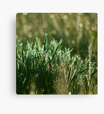 Cold green morning Canvas Print