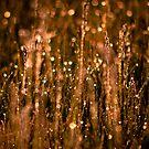 Cold blur by Igor Mazulev