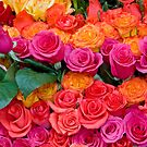 Colorful Roses by Oscar Gutierrez