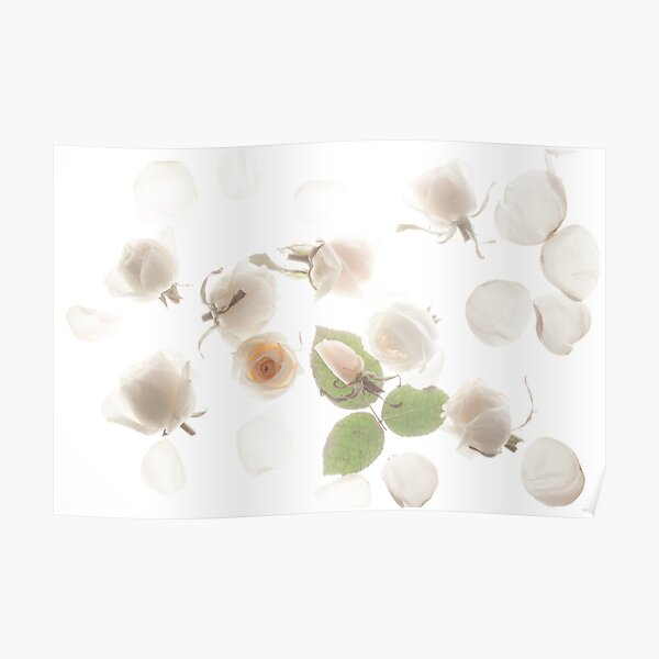 Little White Fishes Poster