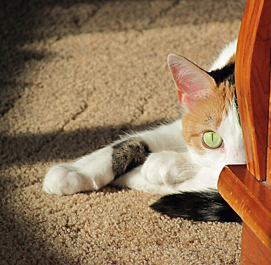 PeekABoo Cat by elisab