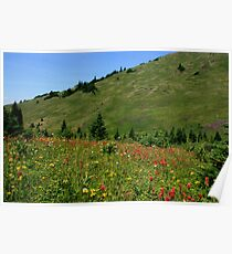colorful alpine meadows Poster
