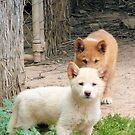 What you doin? huh tell me What you doin?? Curious Alpine Dingo Pups by elsha