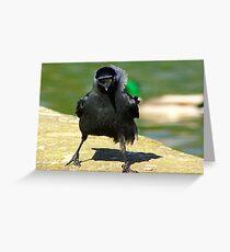 Jackdaw Greeting Card