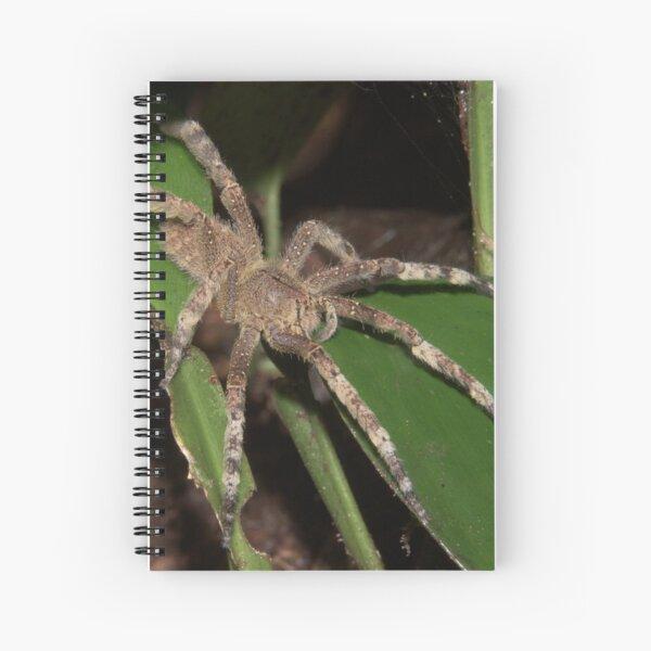 Brazilian wandering spider, Peru Spiral Notebook