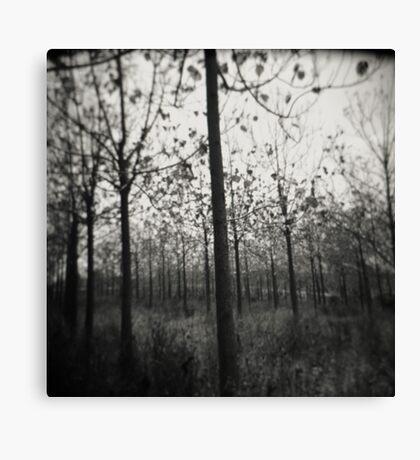 nature's lines Canvas Print