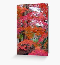 Autumn Colours 5 Greeting Card