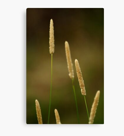 Summer Grasses Canvas Print