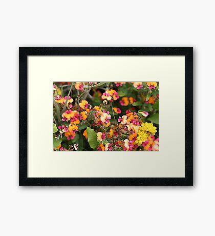 Coral creeper Framed Print