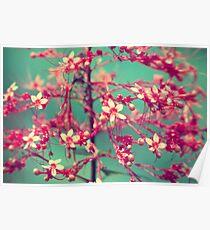 Aquatic Blooms Poster