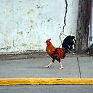 Cock of the Walk by barnsis