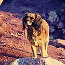 El perro de la playa by Constanza Barnier