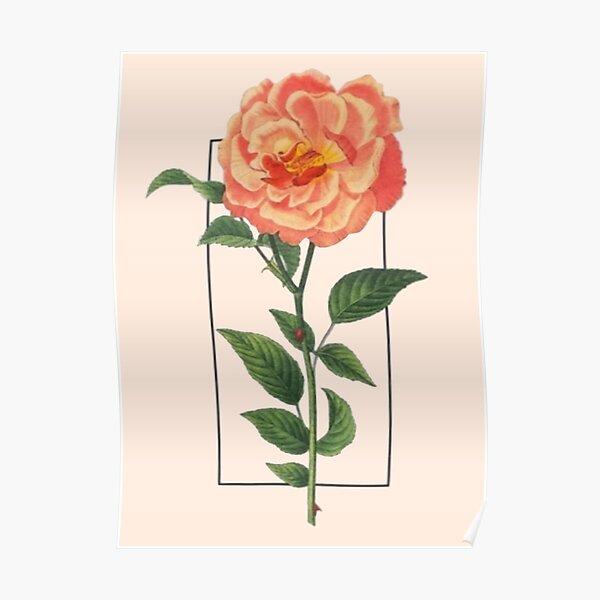 Orange Rose Tour Design Poster