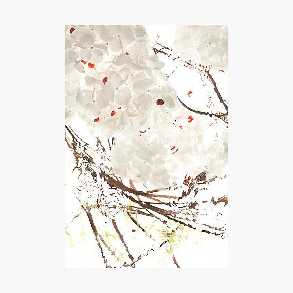 Snow Leaves Photographic Print