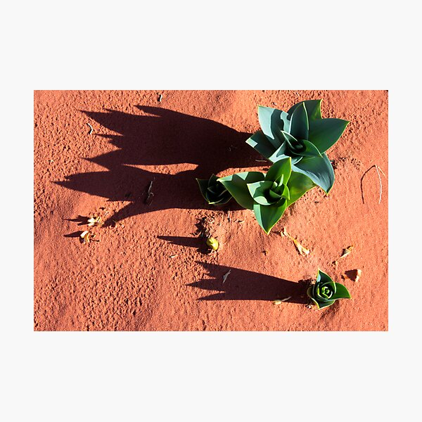 desert green Photographic Print