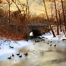 Winter Geese by Jessica Jenney