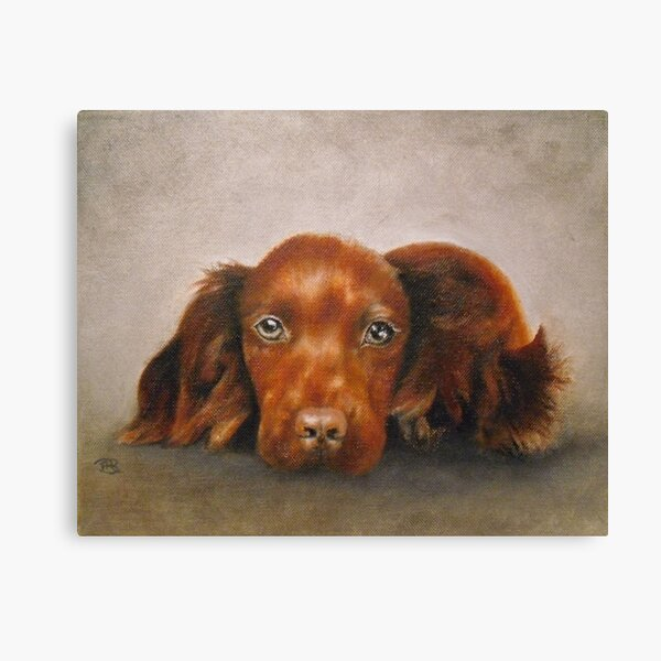 Spaniel Pup Canvas Print