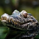 Crocodile by Andre Gascoigne