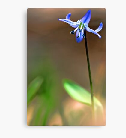 Spring Beauty - In The Afternoon Light Canvas Print