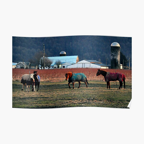 A Cold Day At The Ranch Poster