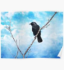 Jackdaw on Blue. Poster