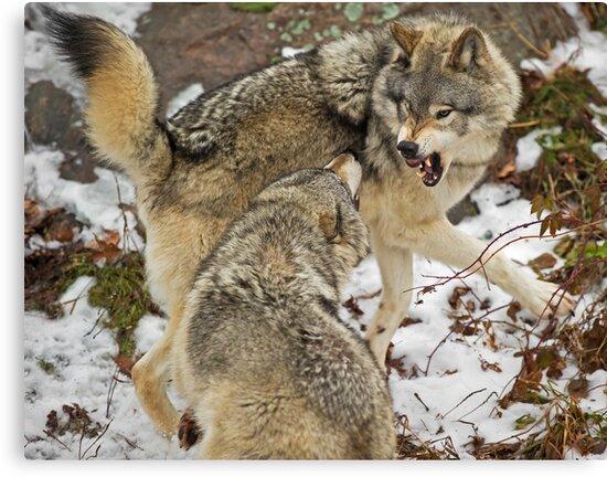 Mild confrontation by Daniel  Parent