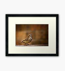 Perched Bird Framed Print