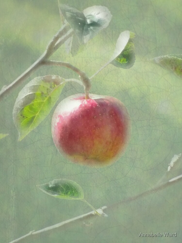 Apple of my Eye. by GoatGirl