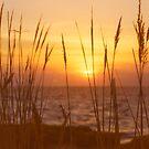 Sunset on Delaware Bay by Debra Fedchin
