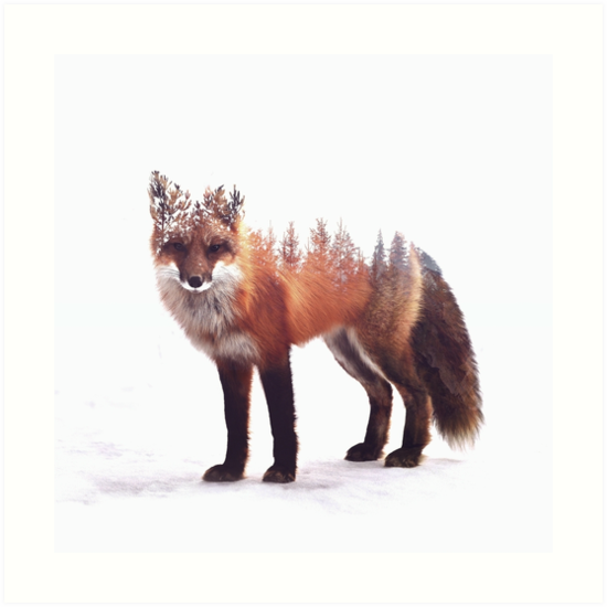 fox by Peg Essert