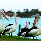 ~The Pelicans Point Of View~ by Julie-Anne Wagner