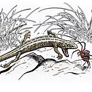 White's skink attacking red and black spider by SnakeArtist