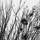 Birds and  branches  by Elizabeth Rodriguez