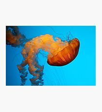 Jelly Jelly Photographic Print