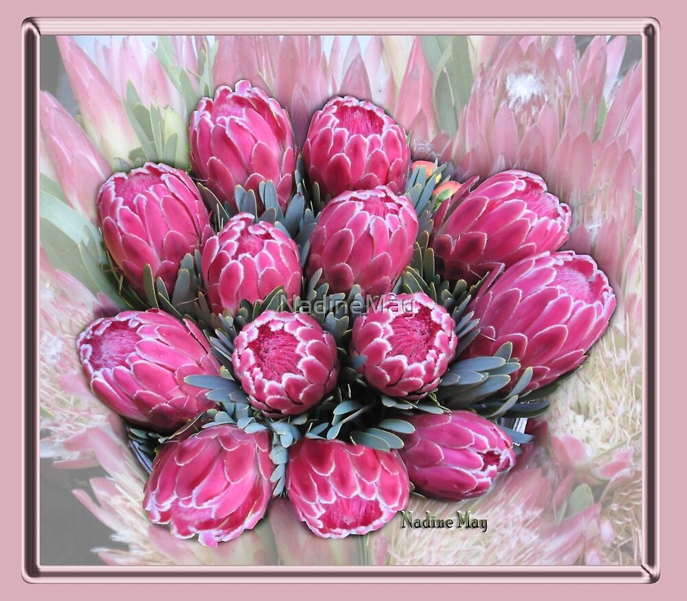 Pink Ice Protea by NadineMay