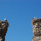 Selcuk, Turkey by Pat Herlihy