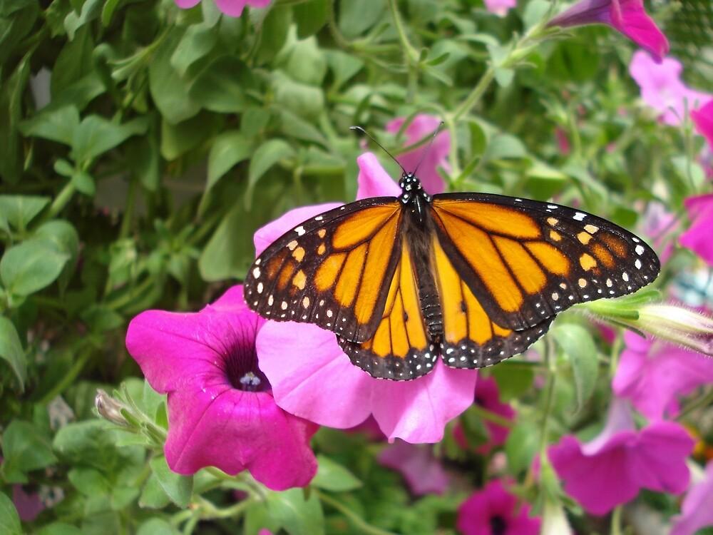 Monarch landing by Emmychu2