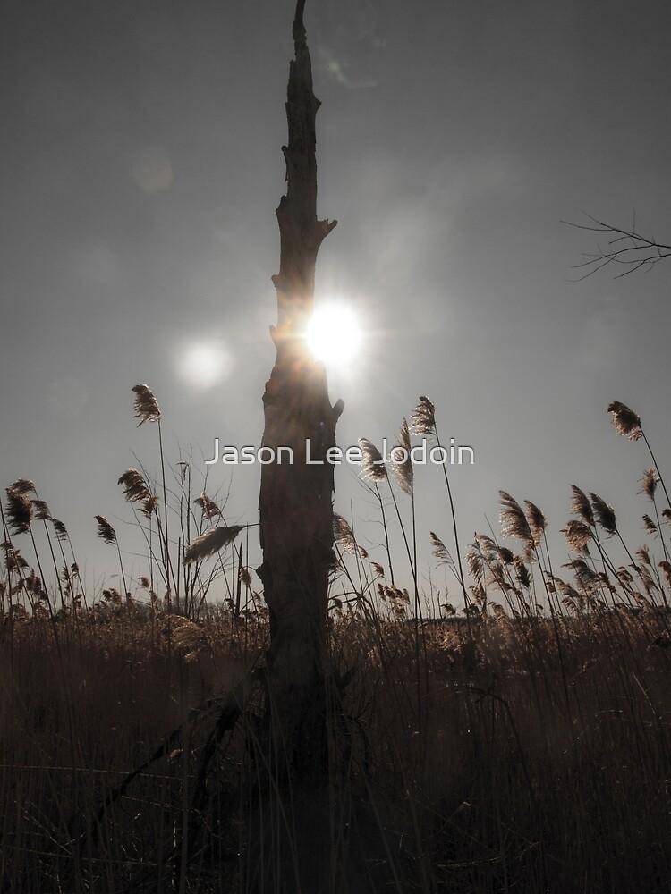 Sun and Grass by Jason Lee Jodoin