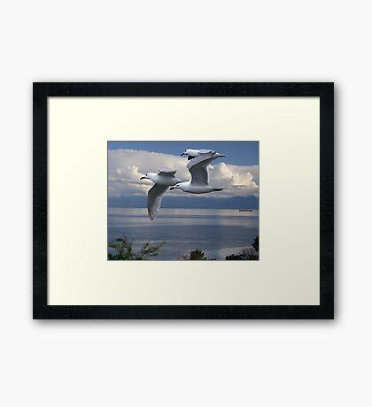 Gulls in Flight Framed Print