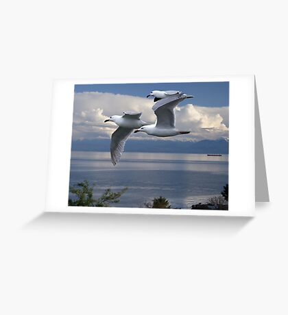 Gulls in Flight Greeting Card