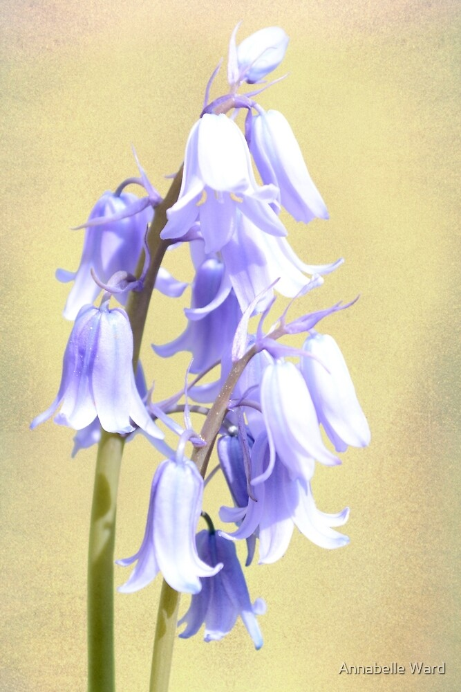 Bluebells on Cream. by Annabelle Ward